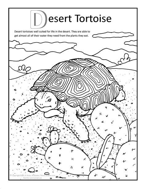 tortoise color desert tortoise coloring page at gilaben arizona