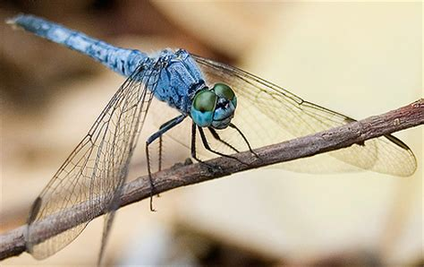 dragonfly photography tips camera settings | slr