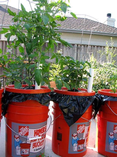 Self Watering 5 Gallon Planter by 25 Best Ideas About 5 Gallon Buckets On