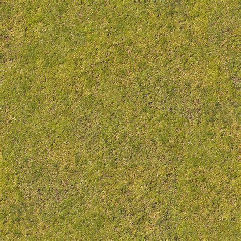 pattern nature grass grass0054 free background texture grass short green