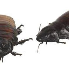 does clorox kill bed bugs 1000 ideas about bed bugs on pinterest bed bugs treatment bug bite and silverfish