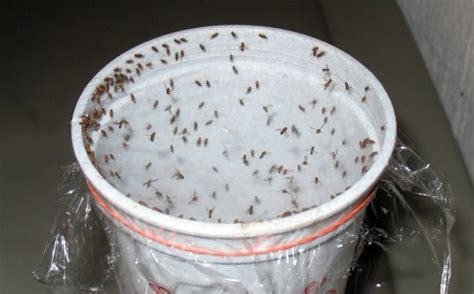 diy   natural insect traps  deterrents