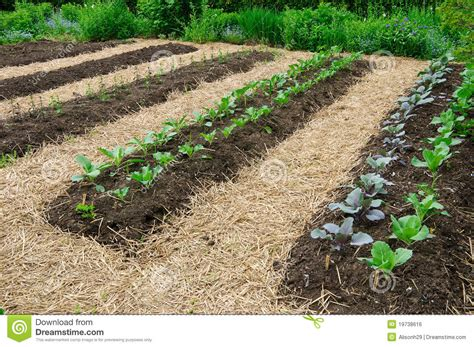 Vegetable Garden Royalty Free Stock Image Image 19738616 Vegetable Garden Pictures Free
