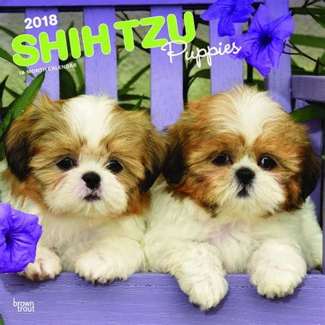 Calendrier Chien 2018 Calendrier 2018 Shih Tzu