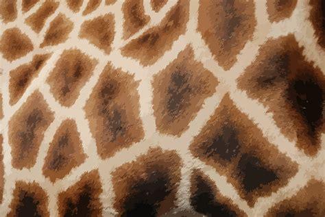 leopard pattern png clipart giraffe fur