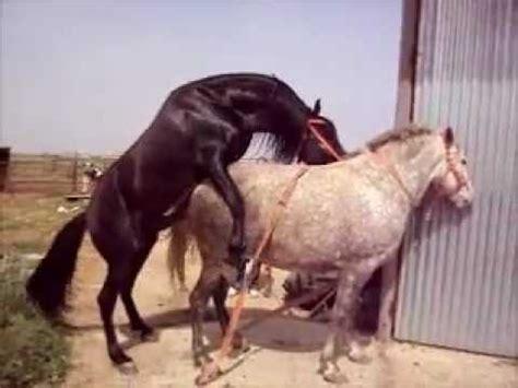httpgozando mujer y caballo cubriendo yegua en a 241 ora cordoba caballo espa 241 ol