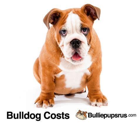 bulldog c section cost why are bulldogs so expensive to buy bulliepupsrus com