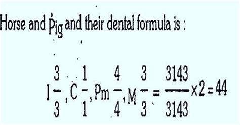dental formula dental formula biozoom