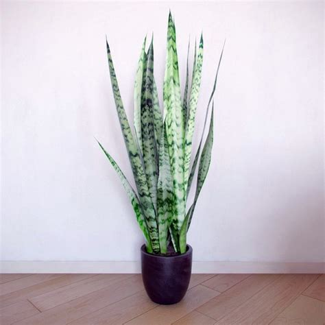 Indoor Plants For Dark Rooms | indoor plants suitable for dark rooms interior design