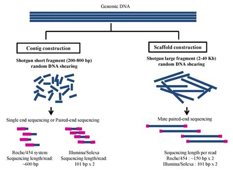 whole genome sequencing illumina illumina whole genome sequencing 28 images frontiers