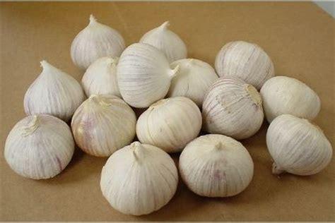 Acar Bawang Putih Tunggal 50gr bawang putih jantan images
