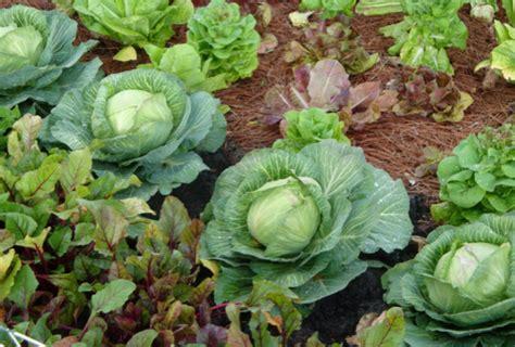 Early Spring Garden Vegetables Garden Ftempo Early Garden Vegetables