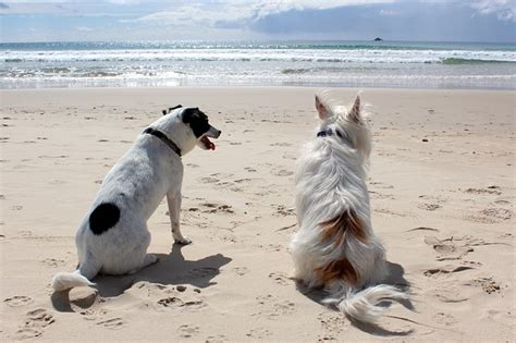 Vacation Pet Pet Pet Product by Free Photo Pet Sea Vacation Free Image On