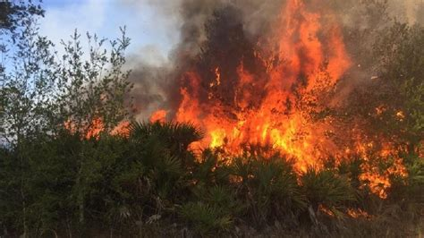 florida wildfires florida officials blame arsonists for 320 wildfires in