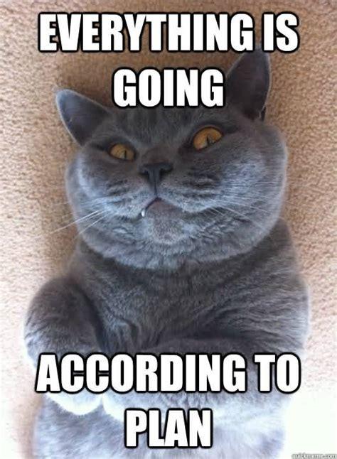 Everything Meme - 100 very famous funny cat memes golfian com