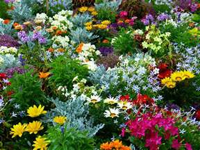 Plant Your Own Garden by Plant Your Own Aromatherapy Garden The Dreaming Earth