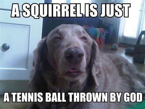 Funny Doge Memes - 45 funny dog memes dogtime