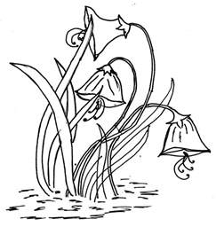 Drawing Outlines For Painting by Glass Painting Patterns Flower Design Pattern Of Pretty Daffodil Flowers
