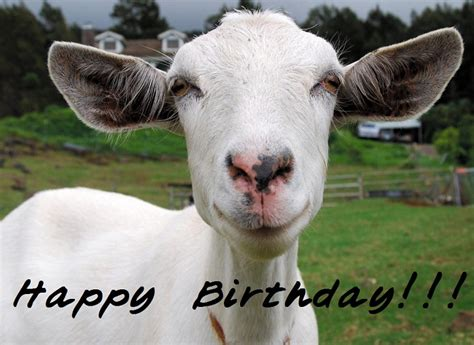 Happy Goat Meme - happy birthday images for a goat goat of the month