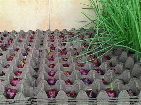 Media Tanam Pak Tani cara mudah tanam bawang merah secara hidroponik artikel