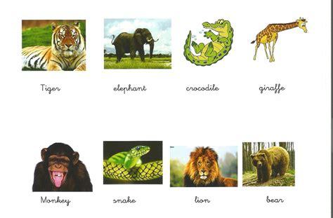 imagenes de animales jungla 161 ya estamos en primaria wild animals ficha 1 tema 5
