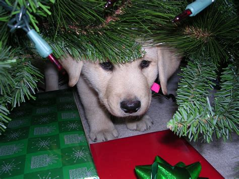 keeping christmas merry and safe for you and your pets