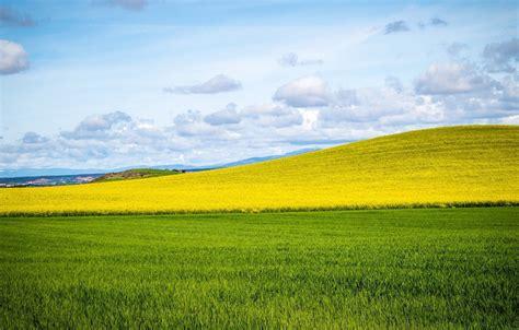 wallpaper field grass horizon hill meadow grass