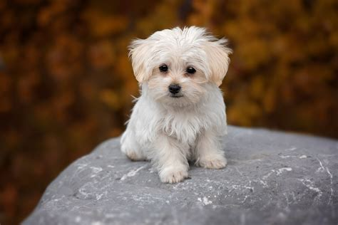 puppy puppy puppy puppy puppy constipation causes how to relieve constipation in puppies