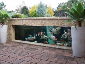 paroi jardin photos carpes koi bassin poisson hors sol paroi verre observer poissons