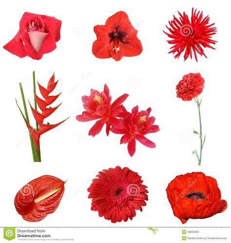 115 u 209 as con flores u 209 as decoradas nail art collage de flores rojas en un fondo blanco foto de archivo