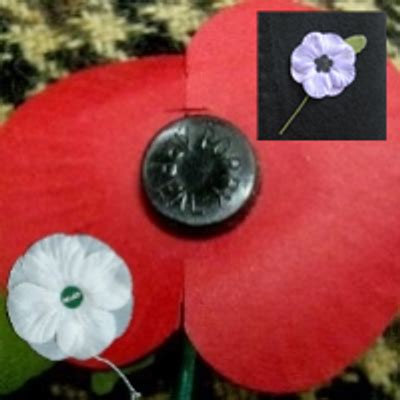 what color is poppy what colour poppy poppywatch