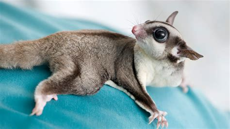 Happy And Cute Animals: Exotic Pets