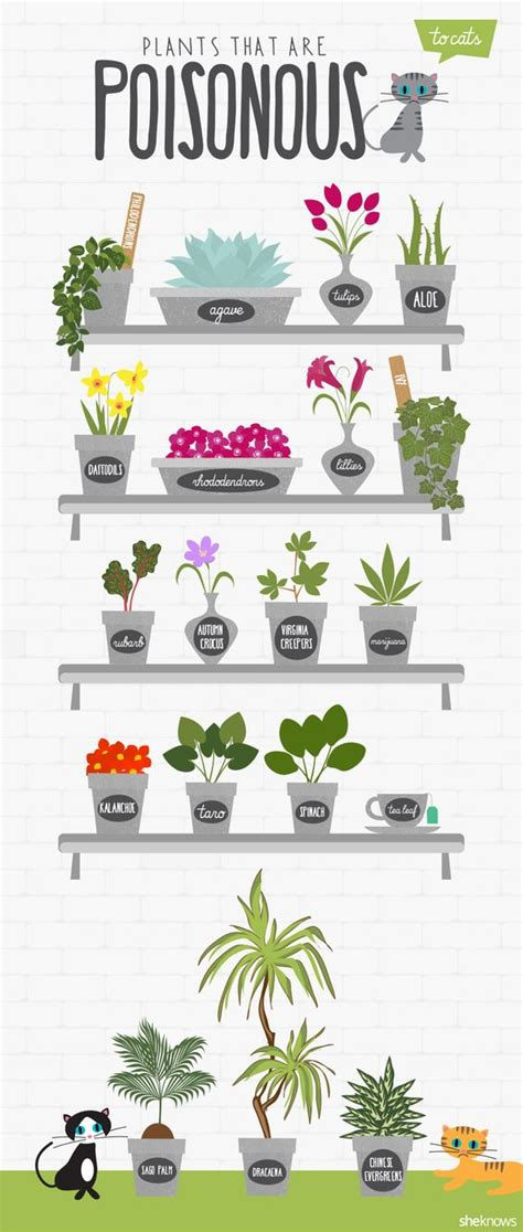 common house plants poisonous to pets if you cats in your home be sure to avoid these poisonous plants around pets