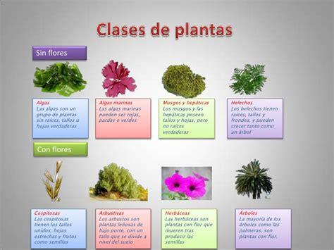 imagenes en ingles de flores plantas
