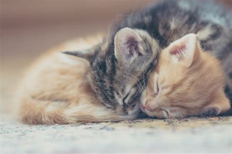 theme names for litter of kittens 5 reasons a mother cat might abandon or reject her young