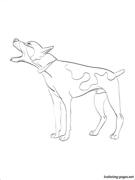 rat terrier coloring page coloring pages