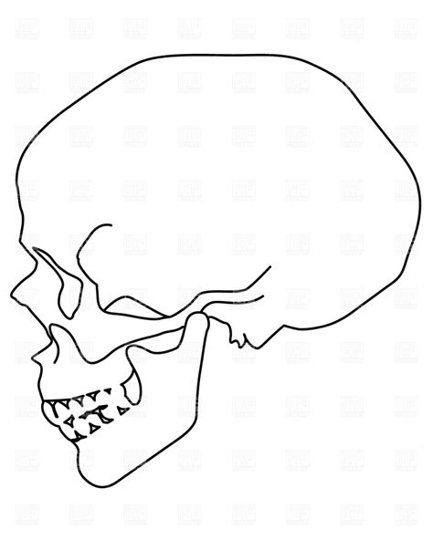 free doodle viewer human skull side view clip vector clip