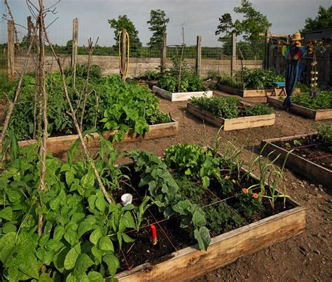 backyard gardening blog best garden blog square foot gardening