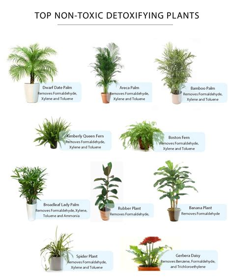 house plants safe for cats house plants not poisonous cats