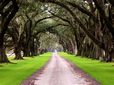 Planters In The South by Tomotley Plantation Sheldon Beaufort County South