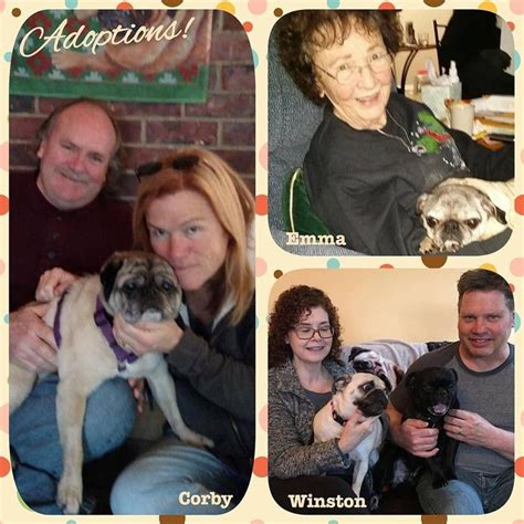 nw pug rescue congratulations to the new additions to our families we always more rescued pugs
