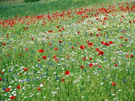 prato fiorito prato fiorito parco naturale regionale sirente velino