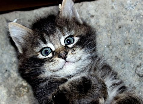The Smile Of The Cat smiling cat photos to turn your frown