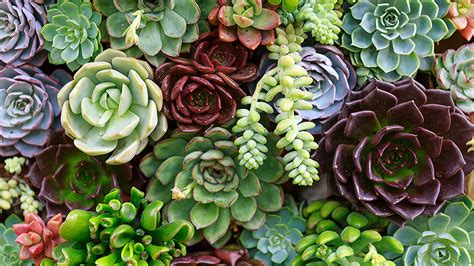 your total guide to succulents stylecaster
