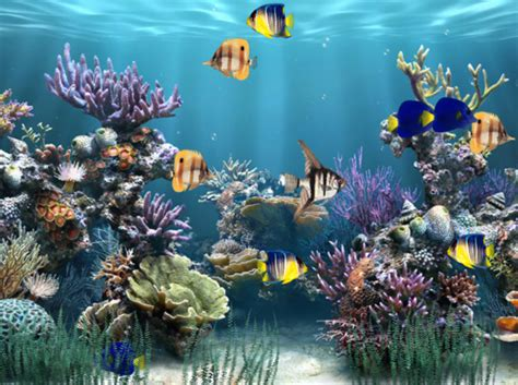 wallpaper colorful fish and interactive water boutique romantica fantezie boutique animated desktop