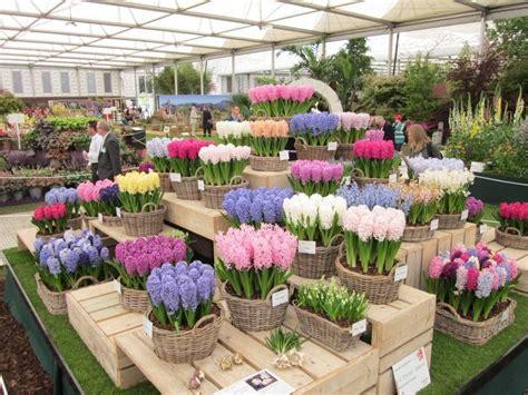 chelsea flower show d e ireland