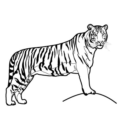 tiger coloring pages online free printable tiger coloring pages for kids