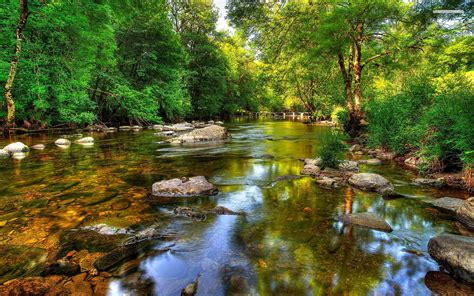 wallpaper river water rocks trees clear river forest rocks wallpapers clear river forest