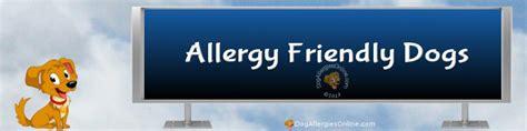 allergy friendly dogs allergy friendly dogs
