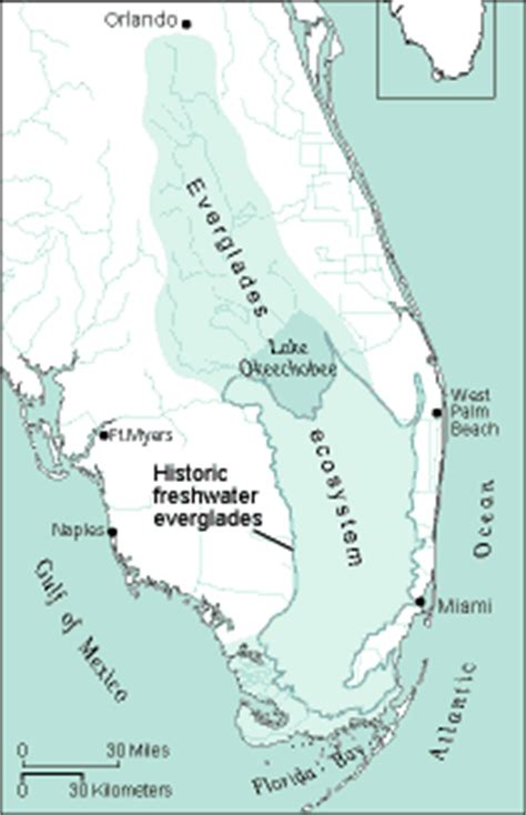 Southern District Of Florida Search Sofia Circ 1182 Excerpt Florida Everglades